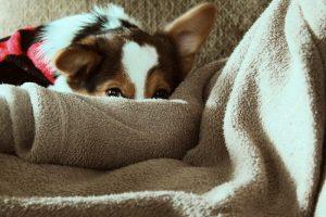 Deka pre psa patrí do základnej výbavy